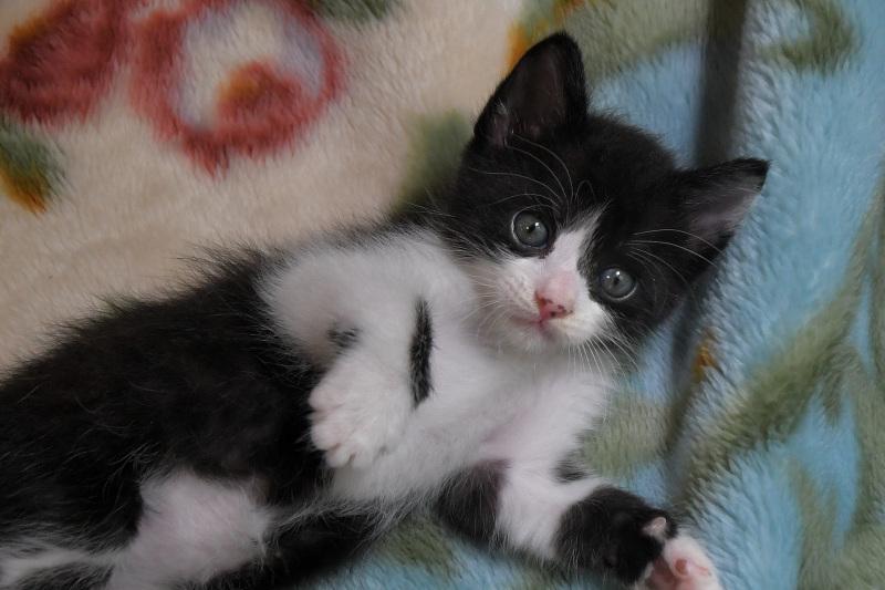 子猫・・・_a0342569_13254977.jpg