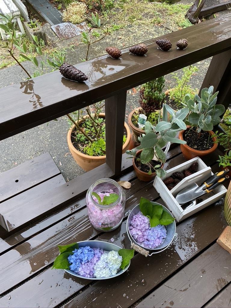 雨の日の庭の紫陽花 & デッキの紫陽花は、、。_c0334574_19442705.jpeg