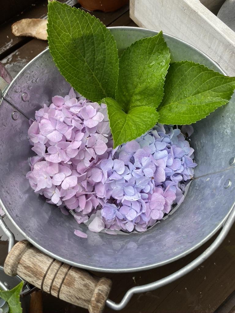 雨の日の庭の紫陽花 & デッキの紫陽花は、、。_c0334574_19451954.jpeg