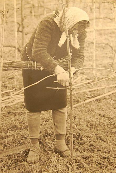 昔のバローロのワイン生産者の労働着_b0346275_04435958.jpg