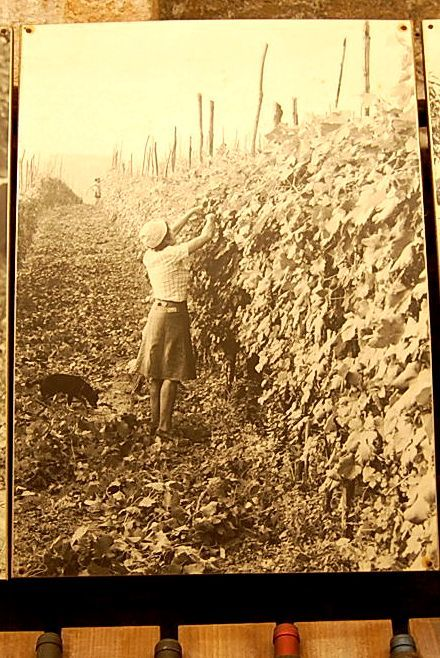 昔のバローロのワイン生産者の労働着_b0346275_04504205.jpg