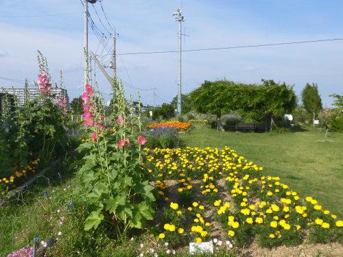「花と風の丘」ある日の風景_d0257693_10115039.jpg