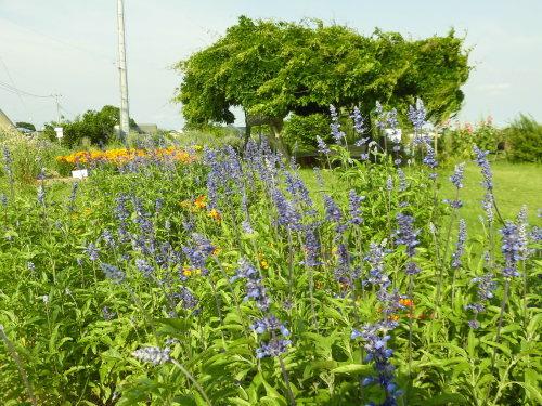 「花と風の丘」ある日の風景_d0257693_10120238.jpg