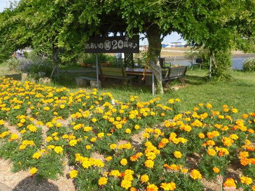 「花と風の丘」ある日の風景_d0257693_10121081.jpg