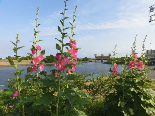 「花と風の丘」ある日の風景_d0257693_10122003.jpg