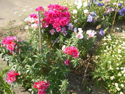 「花と風の丘」ある日の風景_d0257693_10122602.jpg