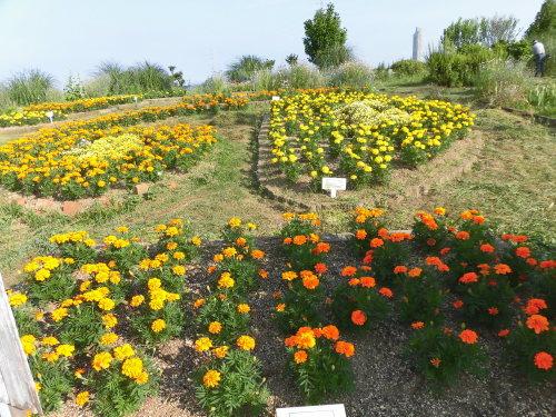「花と風の丘」ある日の風景_d0257693_10123943.jpg