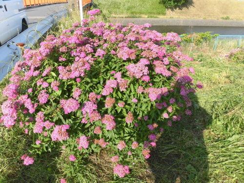 「花と風の丘」ある日の風景_d0257693_10124559.jpg