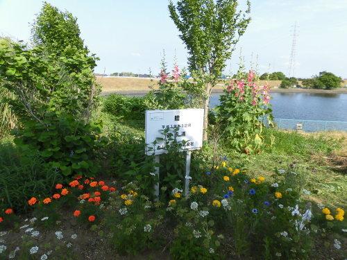「花と風の丘」ある日の風景_d0257693_10130760.jpg