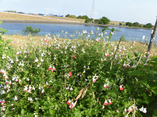 「花と風の丘」ある日の風景_d0257693_10131545.jpg