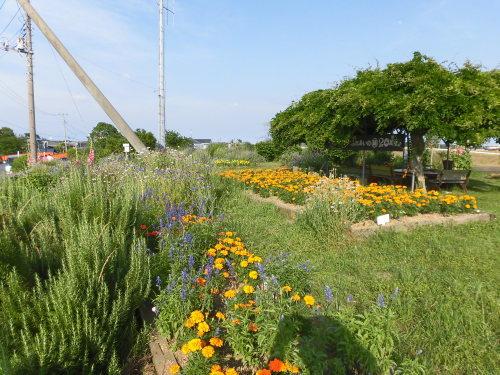 「花と風の丘」ある日の風景_d0257693_10132772.jpg