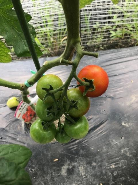 たくさんの収穫_f0204295_16085628.jpg