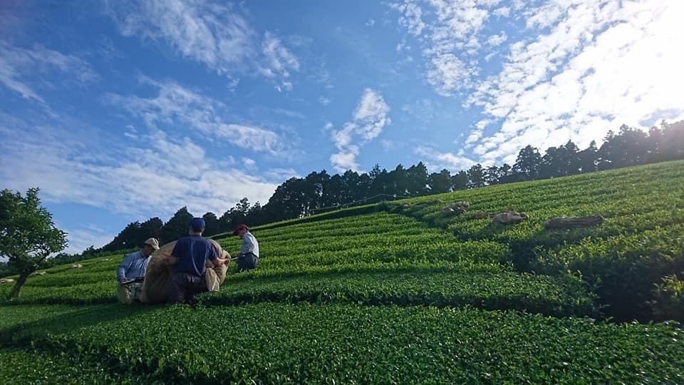 茶畑と茶工場とカフェ整備そして菓子工房_b0028299_21530895.jpg