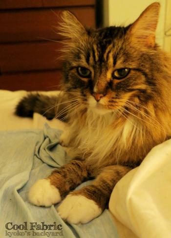 猫と冷感枕カバー、その後_b0253205_08263865.jpg