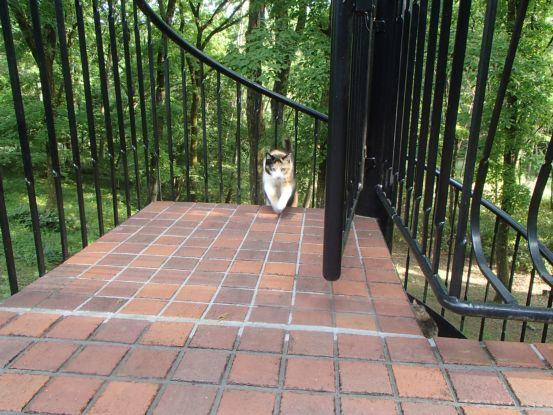 猫たちと夕散歩が日課に_f0064906_15365552.jpg
