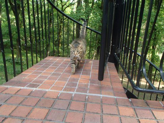 猫たちと夕散歩が日課に_f0064906_15365986.jpg