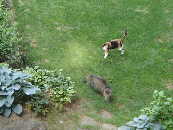 猫たちと夕散歩が日課に_f0064906_15370469.jpg