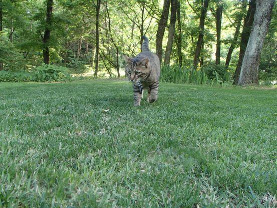 猫たちと夕散歩が日課に_f0064906_15370983.jpg