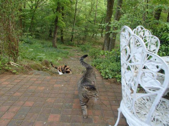 猫たちと夕散歩が日課に_f0064906_15371529.jpg