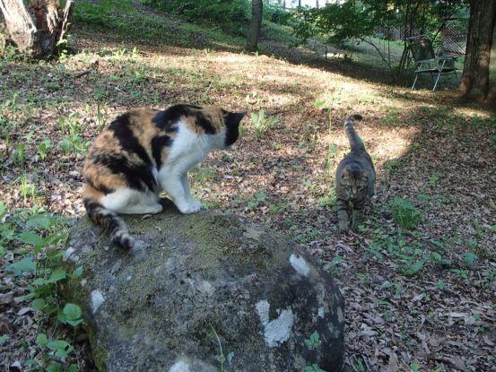 猫たちと夕散歩が日課に_f0064906_15371979.jpg