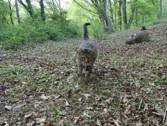 猫たちと夕散歩が日課に_f0064906_15372792.jpg