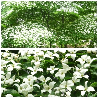 北大植物園_b0198109_20393462.jpg