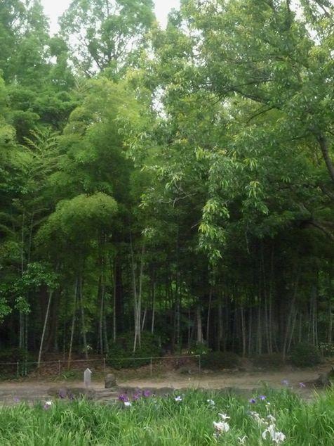 須磨離宮公園散策・・♪_d0147611_11401241.jpg