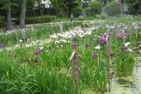 須磨離宮公園散策・・♪_d0147611_12172099.jpg