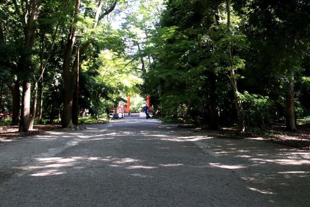 河合神社と糺の森 下賀茂神社_e0048413_21060340.jpg