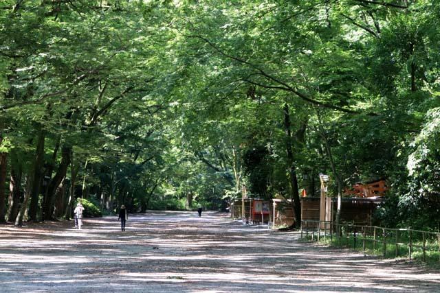 河合神社と糺の森 下賀茂神社_e0048413_21061013.jpg