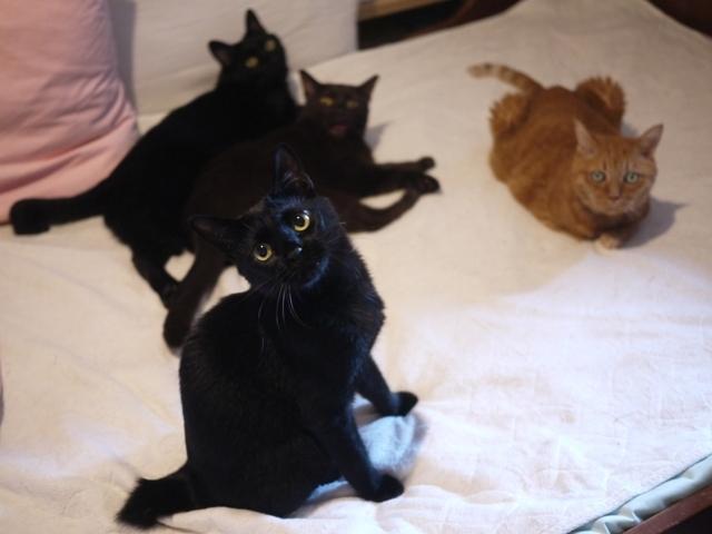 まったりしたいのに猫 しぇるぎゃぉすあんしゃぁりぃめりぃぽぴんず編。_a0143140_19021203.jpg