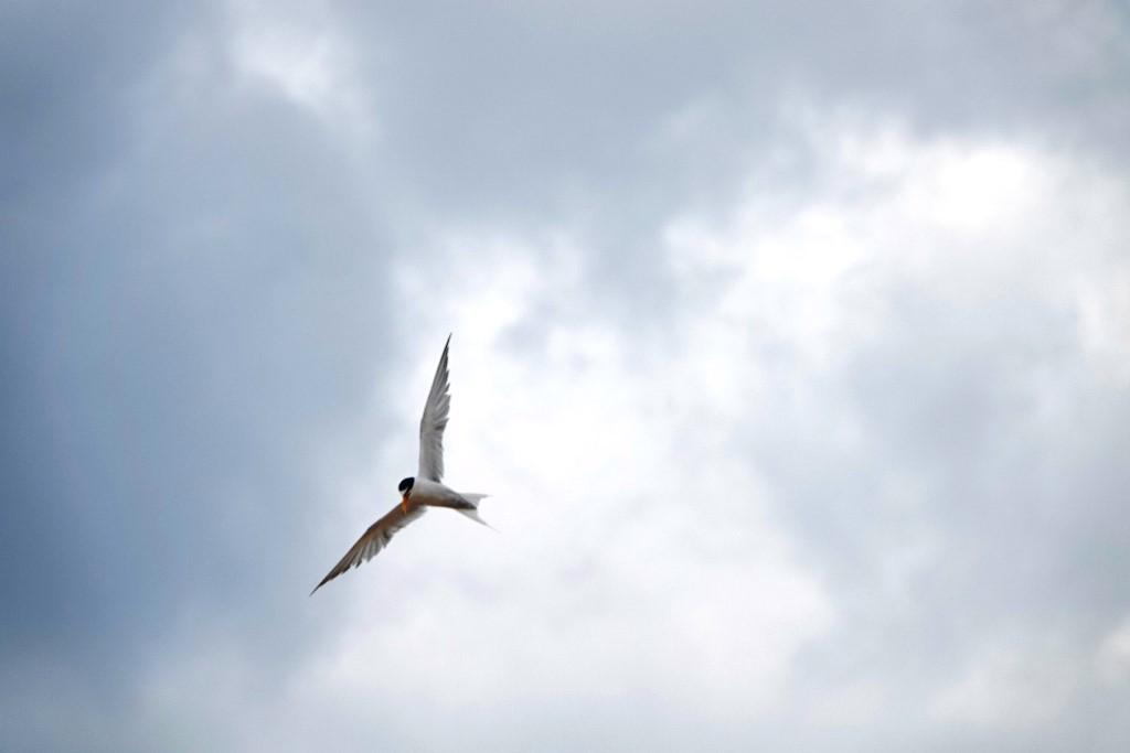 野鳥トレ 216 舞子浜_b0227552_18182492.jpg