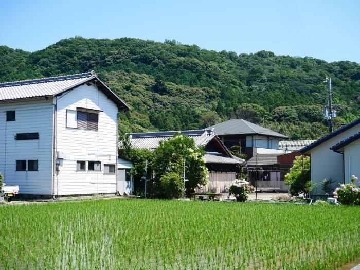 6月23日(火)の田園風景  2020-06-28 00:00_b0093754_20365811.jpg