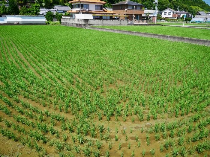 6月23日(火)の田園風景  2020-06-28 00:00_b0093754_20372359.jpg