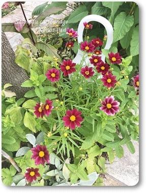 お庭のお花_b0244959_23450881.jpg