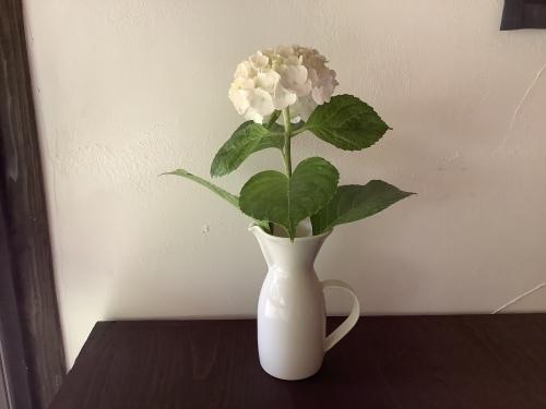 花を楽しむ器たち〜5_d0336460_02402884.jpeg