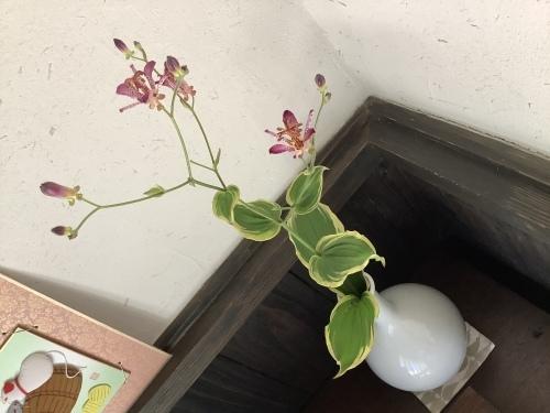 花を楽しむ器たち~6_d0336460_02444721.jpeg