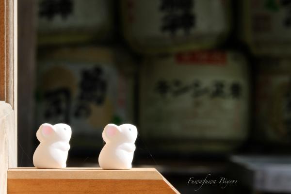 京都で出会った動物たち **_d0344864_19555262.jpg