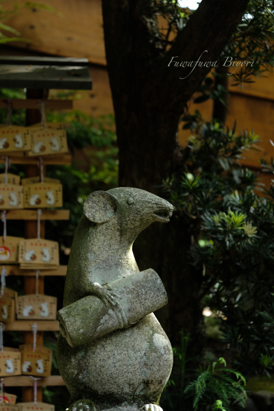 京都で出会った動物たち **_d0344864_19560220.jpg