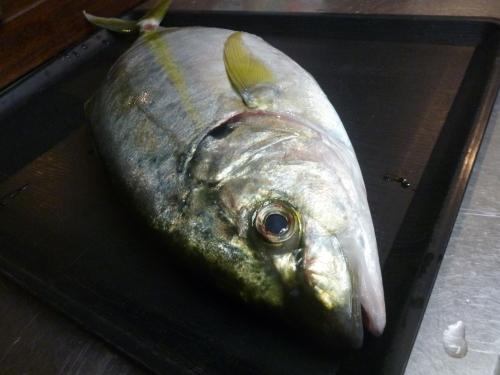 夏の魚です!_e0252966_11183169.jpg
