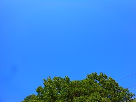 ネムノキに夏の予感_e0175370_21444975.jpg