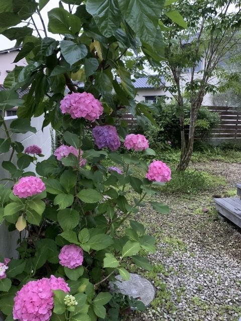季節はめぐり木々は育つ_c0274374_00371221.jpeg
