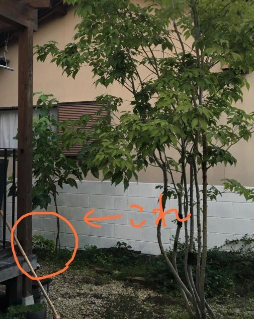 季節はめぐり木々は育つ_c0274374_00590908.jpeg