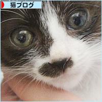 キュンキュン子猫_a0389088_13121439.jpg