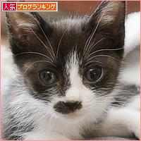 キュンキュン子猫_a0389088_13121471.jpg