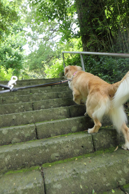 神社までお散歩♪_b0275998_12225224.jpg
