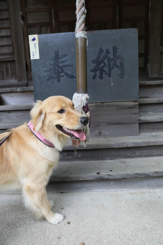 神社までお散歩♪_b0275998_12231741.jpg