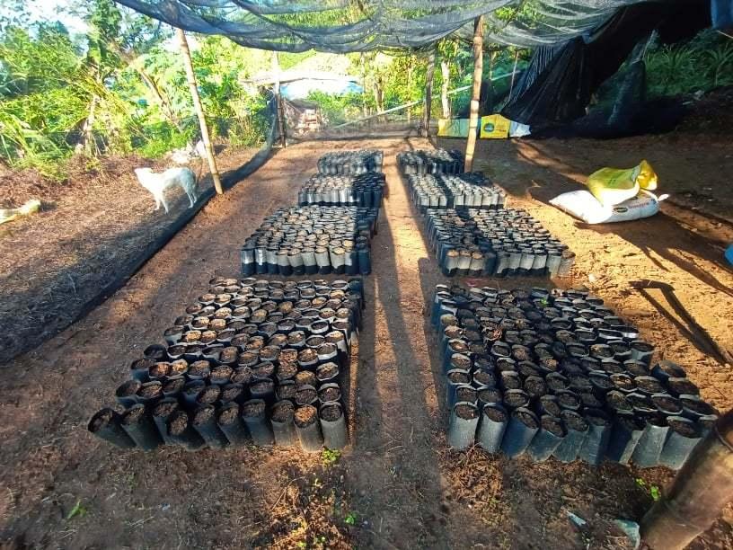 キブンガン郡でのアグロフォレストリーによる植林と生態系調査プロジェクト終了しました!_b0128901_16161539.jpg
