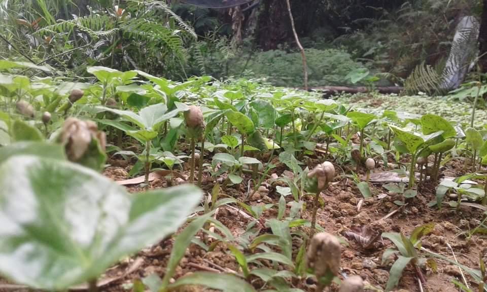 キブンガン郡でのアグロフォレストリーによる植林と生態系調査プロジェクト終了しました!_b0128901_16164883.jpeg