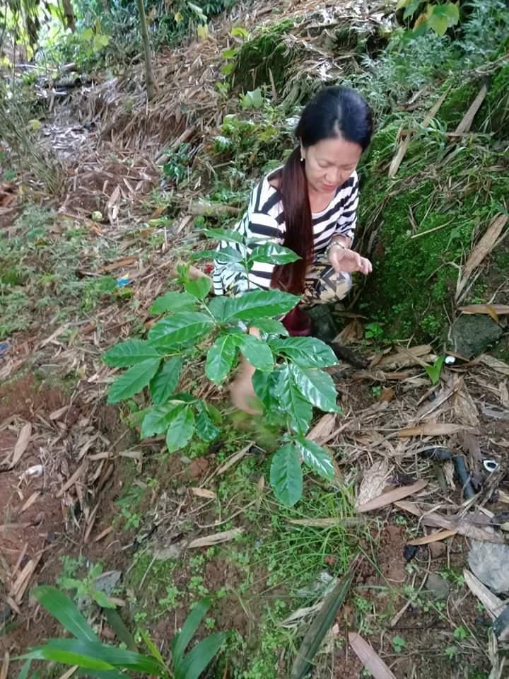 キブンガン郡でのアグロフォレストリーによる植林と生態系調査プロジェクト終了しました!_b0128901_16181849.jpeg